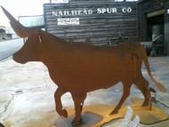 Longhorn Heifer