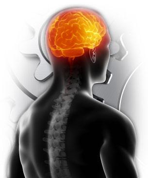 brain05.jpg