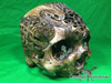 Zane Wylie carved real human skull front right photo Product URL: www.osteologywarehouse.com/real-human-skulls/zane-wylie-carved-real-human-skull.html
