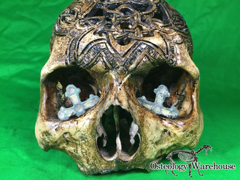 Zane Wylie carved real human skull front close-up photo Product URL: www.osteologywarehouse.com/real-human-skulls/zane-wylie-carved-real-human-skull.html