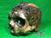 Zane Wylie carved real human skull front left photo Product URL: www.osteologywarehouse.com/real-human-skulls/zane-wylie-carved-real-human-skull.html