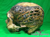 Zane Wylie carved real human skull side left photo Product URL: www.osteologywarehouse.com/real-human-skulls/zane-wylie-carved-real-human-skull.html