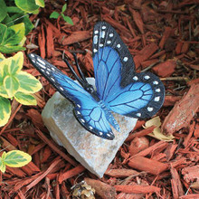 BUTTERFLY ROCKS BLUE