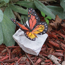 BUTTERFLY ROCKS MONARCH