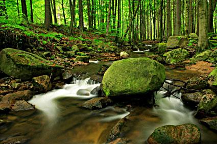 streaminwoods.jpg