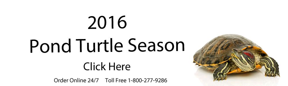 Banner 2016 pond turtle season click here