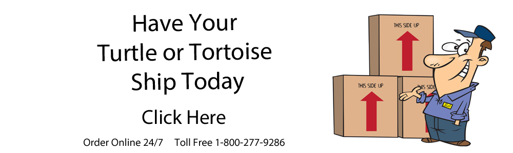 Banner ship your turtles or tortoises out today