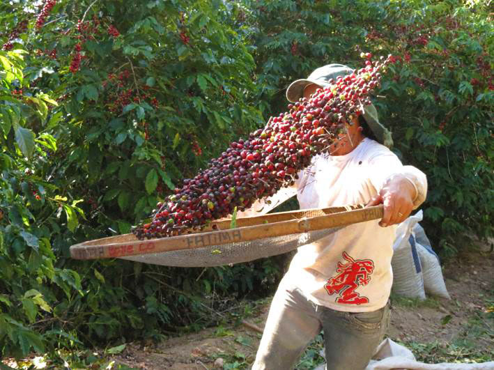 brazil-vcc-tossing-cherries.jpg