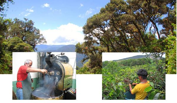 Down to Earth Farm - Costa Rica Dota Tarrazu coffee