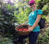 Lorena picking coffee at Mercedes Farm