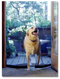 Perfect as a pet door while keeping flying insects out!  No problem for dogs.