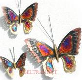 Butterfly-099