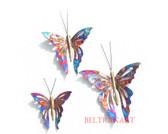 Butterfly-098