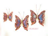 butterfly-024