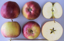 Royal Gala Apple (stepover)