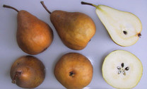 Beurre Bosc Pear (medium)