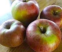 Brown's Apple (dwarf)