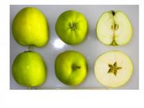 Emneth Early Apple (dwarf)