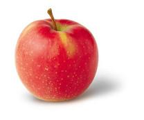 Jonagold Apple (dwarf)