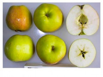 Doctor Hogg Apple (medium)