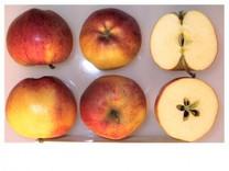 Gala Apple (medium)