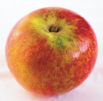 Cox's Orange Pippin Apple (stepover)