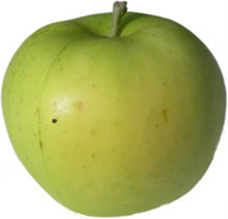 Keswick Codlin Apple (stepover)