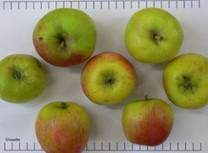 Clozette Apple (tall)