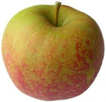 Cornish Aromatic Apple (tall)