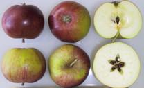 Dabinett Apple (medium)