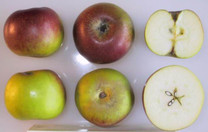 Verité Apple (dwarf)
