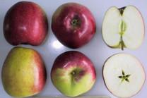 Opalescent Apple (medium)