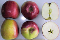 Opalescent Apple (tall)