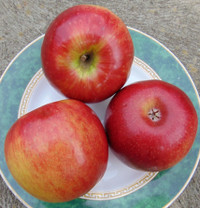 Cripp's Red (Sundowner™) Apple (stepover)