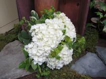 White Hydrangeas & Lambs Ears