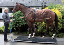 Horse Weigh Scale Burghley
