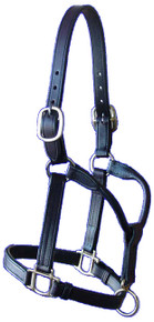 Halter Sale Short Yearling 2 Buckle Crown,Buckle Chin