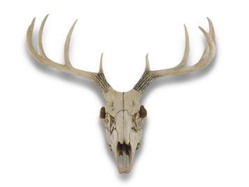 https://s3.amazonaws.com/zeckosimages/97422-weathered-glory-deer-skull-1I.jpg