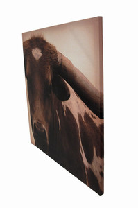 https://s3.amazonaws.com/zeckosimages/OW-71626-longhorn-cow-wall-hanging-canvas-1I.jpg