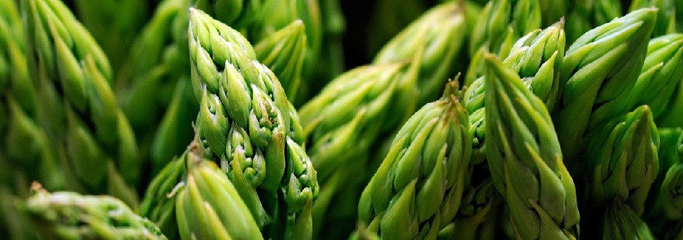 category-asparagus-resized.jpg