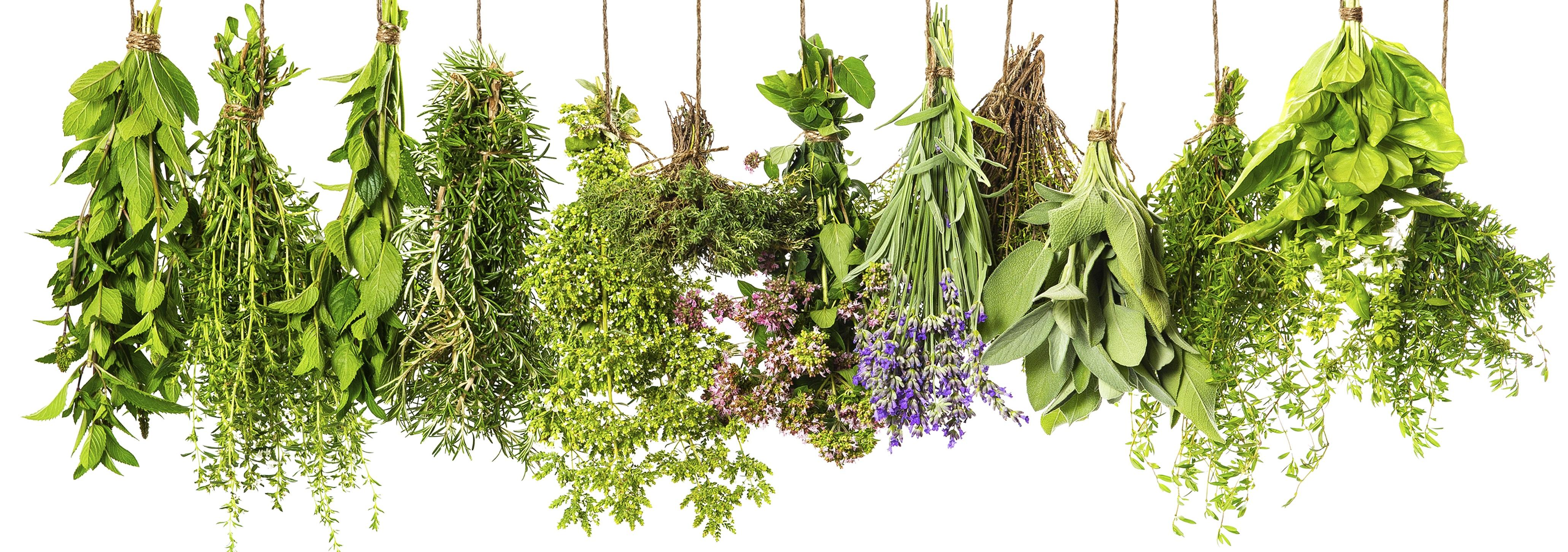 herbs-category.jpg