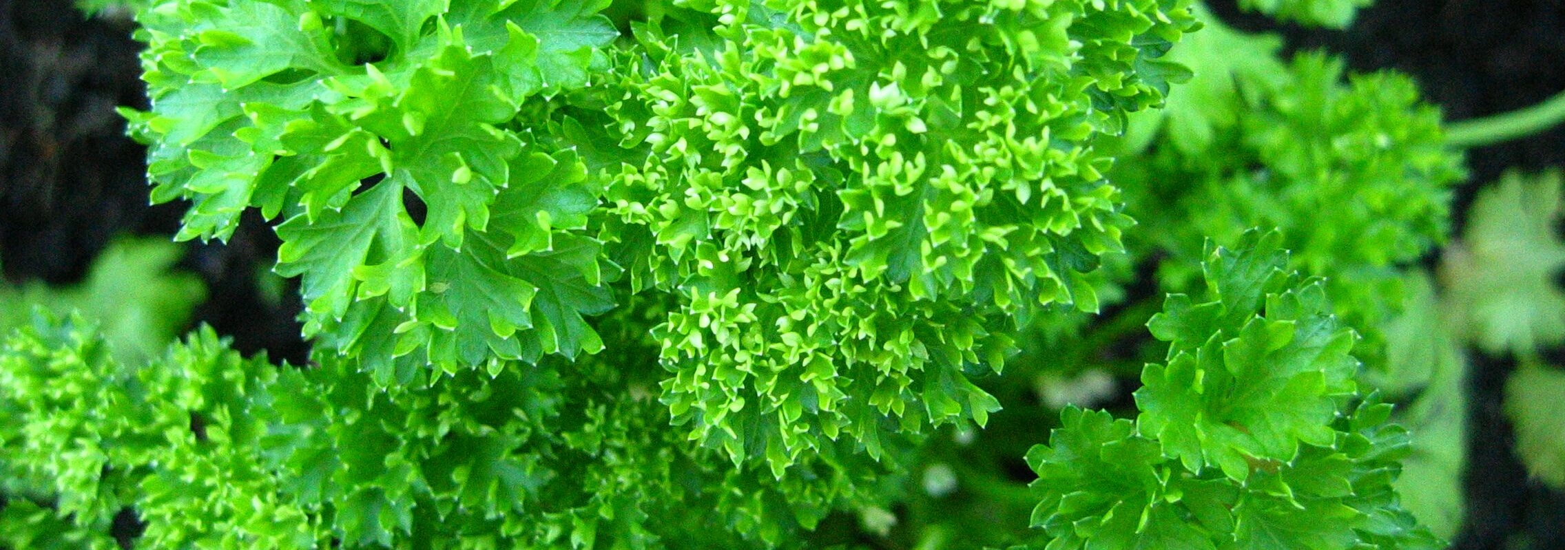 parsley-category.jpg