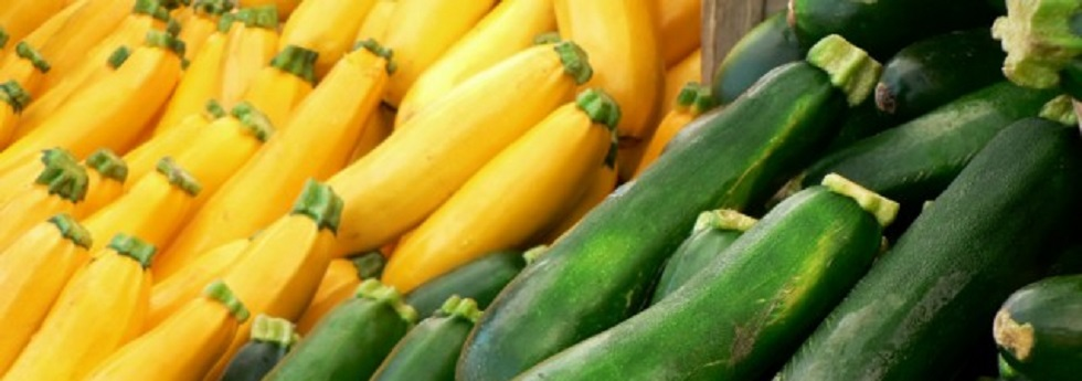 summer-squash-category.jpg