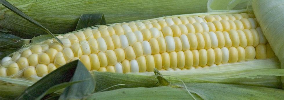 sweet-corn-category.jpeg
