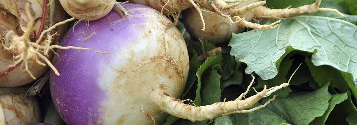 turnip-category.jpg