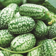 Mexican Sour Gherkin
