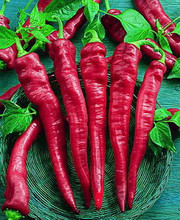 Cayenne Red Large Thick