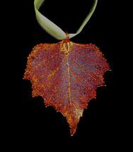 Birch Leaf Ornament
