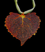 Cottonwood Leaf Ornament