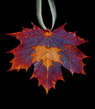 Maple on Maple Leaf Ornament